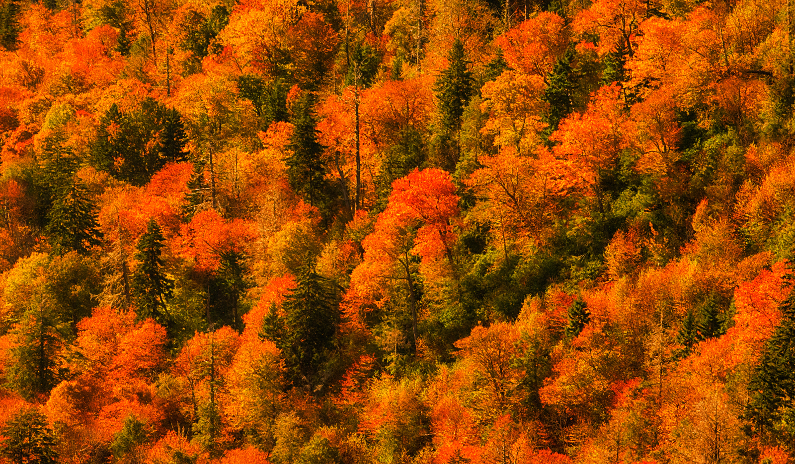 Great Smoky Mountains NP Fall Workshop
