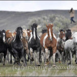Colorado Cowboys and Great American Horse Drive